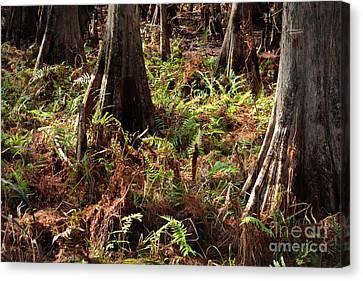 Fern Forest Floor Canvas Print