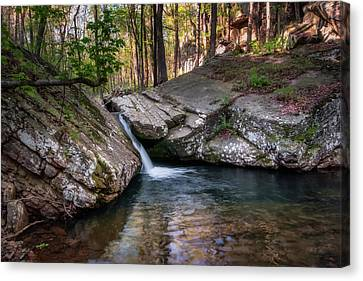 Jamesbarber Canvas Print - Fern Gully by James Barber