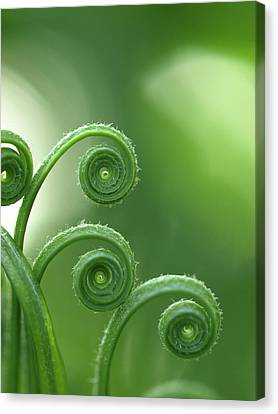 Fern In Forest Canvas Print by © Machel Spence