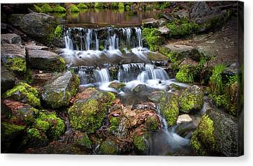 Fern Springs Canvas Print