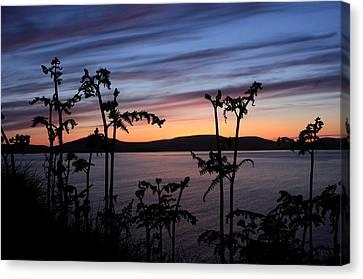 Sea Fern Canvas Print - Fern Sunset by Aidan Moran