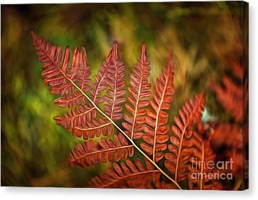 Ferns Canvas Print - Fern by Veikko Suikkanen