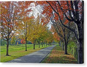 Ferndale Fall Colors Canvas Print by Matthew Adair