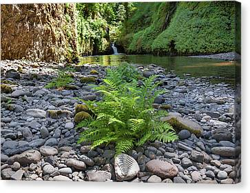 Canvas Print - Ferns Along Banks Of Eagle Creek by David Gn