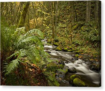 Ferns Along Flowing Creek Canvas Print by Jean Noren