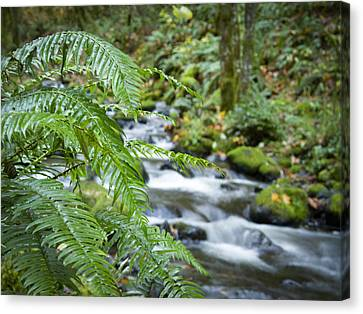 Ferns Along The Creek Canvas Print by Jean Noren
