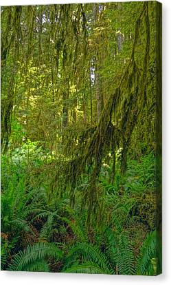 Ferns And Moss In Hoh Rainforest Canvas Print by Dan Sproul