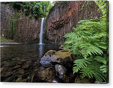 Ferns And Rocks By Abiqua Falls Canvas Print by David Gn