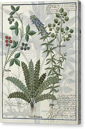 Ferns, Brambles And Flowers Canvas Print by Robinet Testard
