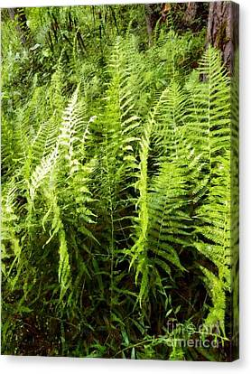 Ferns - Foresta Verde - The Forest Floor Canvas Print by Janine Riley
