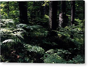 Canvas Print featuring the photograph Ferns In The Forest Wc by Lyle Crump