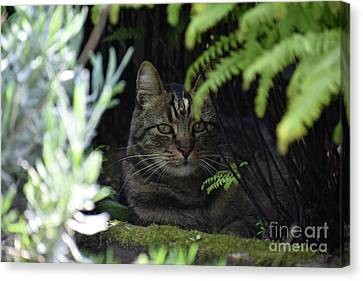 Ferny Cat Cave Canvas Print