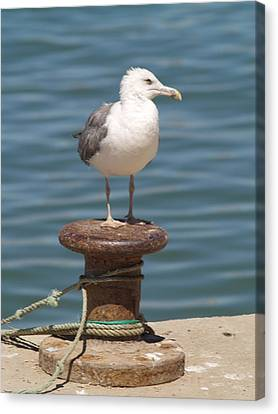 Canvas Print featuring the photograph Ferragudo Seagull At Rest by Michael Canning
