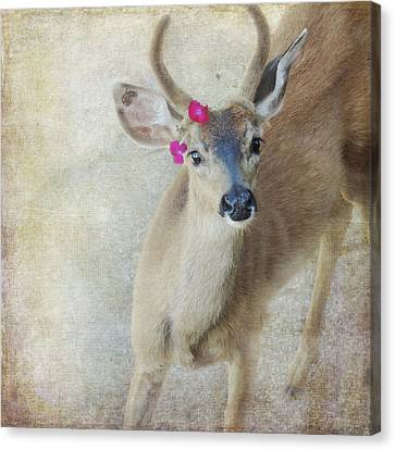 Canvas Print featuring the photograph Festive Deer by Sally Banfill