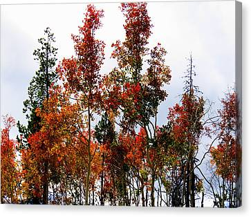 Canvas Print featuring the photograph Festive Fall by Karen Shackles