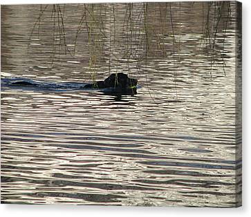 Fetch Swimming Canvas Print by Hasani Blue