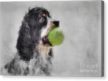 Canvas Print featuring the photograph Fetching Cocker Spaniel  by Benanne Stiens