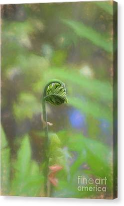 Fiddlehead Fern - Macro Canvas Print