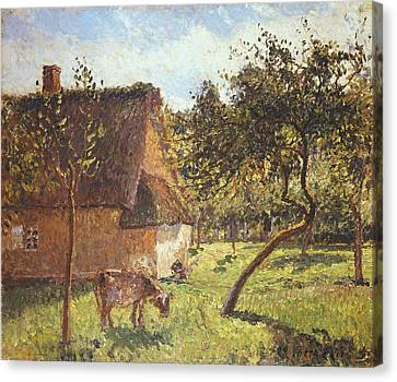 Field At Varengeville Canvas Print by Camille Pissarro