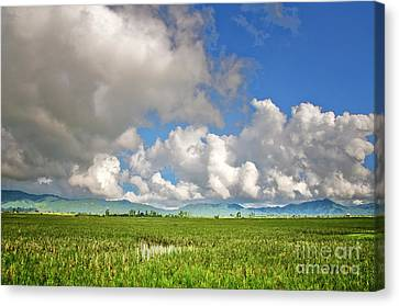 Canvas Print featuring the photograph Field by Charuhas Images