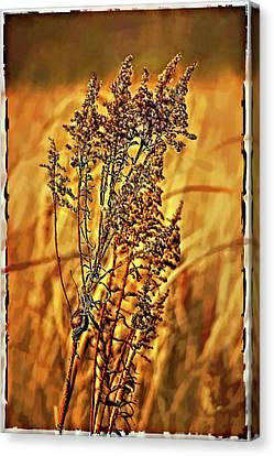 Field Frolic Canvas Print by Steve Harrington