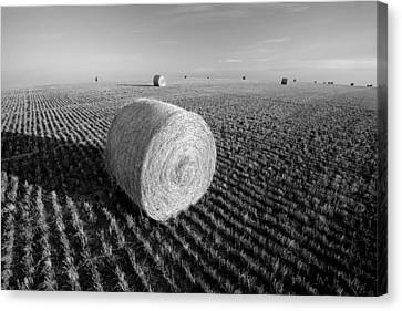 Field Full Of Bales In Black And White Canvas Print by Todd Klassy