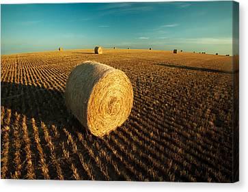 Field Full Of Bales Canvas Print by Todd Klassy