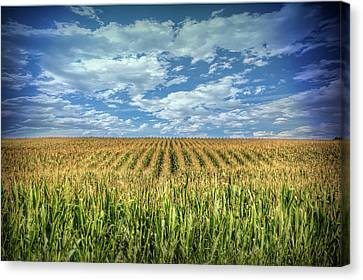 Indiana Corn Rows Canvas Print - Field In Oaktown by Todd Carter