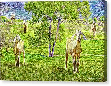 Field Of Baby Goat Dreams Canvas Print by Joel Bruce Wallach
