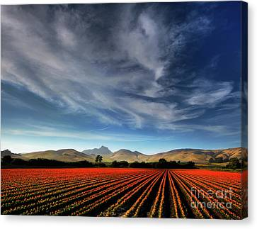 Field Of Color Canvas Print