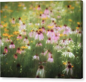 Field Of Coneflowers 5x6 Canvas Print by James Barber