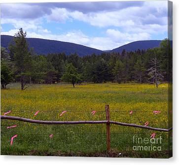 Field Of Dandelions Canvas Print by Donna Cavanaugh