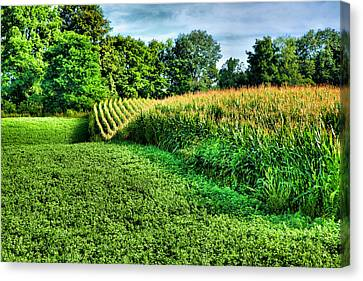 Field Of Dreams Iv Canvas Print