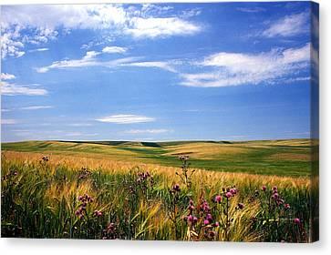 Field Of Dreams Canvas Print by Kathy Yates