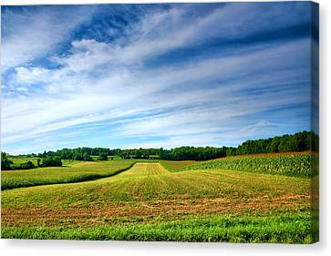 Cornfield Canvas Print - Field Of Dreams Two by Steven Ainsworth