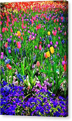 Field Of Flowers Canvas Print by Tamyra Ayles