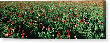 Field Of Flowers, Texas Canvas Print by Panoramic Images