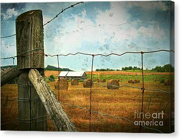 Field Of Freshly Cut Bales Of Hay Canvas Print by Sandra Cunningham