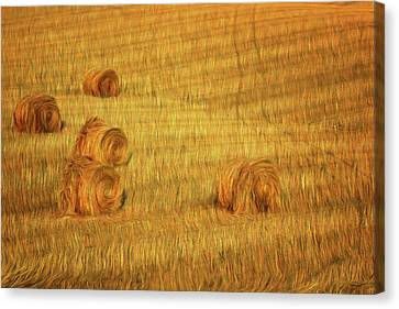 Field Of Crops Canvas Print - Field Of Gold 4 by Nikolyn McDonald