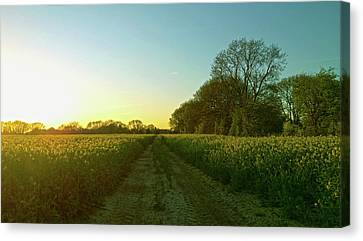 Canvas Print featuring the photograph Field Of Gold by Anne Kotan