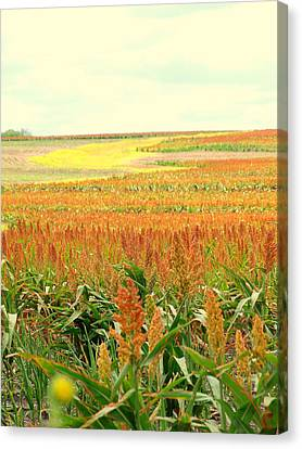 Field Of Gold Canvas Print by James Granberry