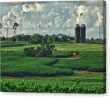 Cotton Farm Canvas Print - Field Of Green by Michael Thomas