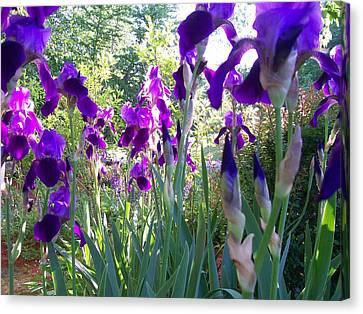 Canvas Print featuring the digital art Field Of Irises by Barbara S Nickerson