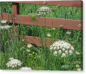 Field Of Lace Canvas Print by Ann Horn