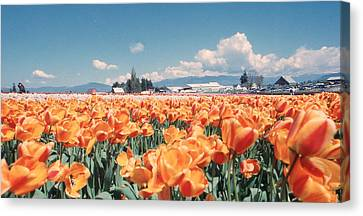Field Of Orange Canvas Print