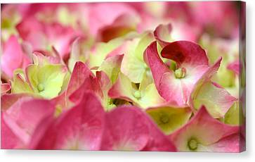 Canvas Print featuring the photograph Field Of Petals by Corinne Rhode