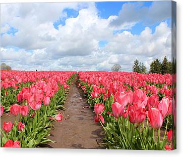 Field Of Pink Canvas Print