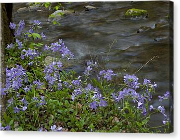 Canvas Print featuring the photograph Field Of Purple 3206 by Peter Skiba