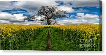 Field Of Rapeseeds Canvas Print by Adrian Evans