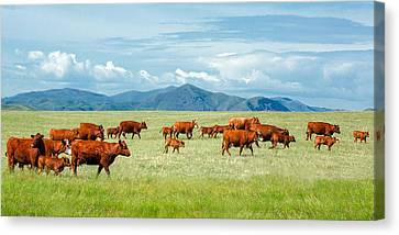 Field Of Reds Canvas Print by Todd Klassy